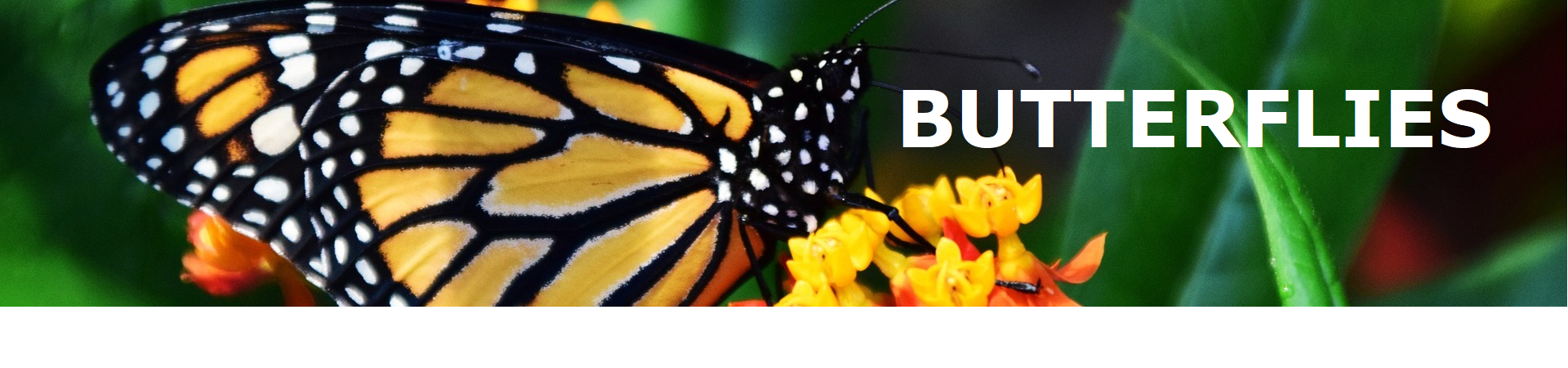 Butterfly Home Decor and Gifts