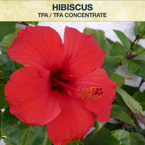 TPA / TFA Hibiscus Concentrate