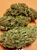 Southern Skunk is a well cured (dry) strain to maximize production. The smoke is medium-potent and very relaxing. *Beware due to the curing process this strain may contain a few seeds.   Available from Lazarus Naturals Date Tested: 03/20/2019 Test Result UID: ANL20160320A242052 HPLC Chromatograph Potency Profile:     0.05% CBG-A     0.03% CBG     0.07% CBG-TOTAL     (CBG-A * 0.878 + CBG)     0.04% ∆9-THC-A     0.06% ∆9-THC     < 0.01% ∆8-THC     < 0.01% CBN     0.09% THC-TOTAL     (∆9-THC-A * 0.877 + ∆9-THC)     1.77% CBD-A     0.95% CBD     2.50% CBD-TOTAL     (CBD-A * 0.877 + CBD)     0.10% CBC     1.14% ACTIVATED-TOTAL   ∆9THC + ∆8THC + CBN + CBD + CBG + CBC     Analytical360.com     Terpene Profile     < 0.01% Linalool     < 0.01% Caryophyllene oxide     < 0.01% Myrcene     < 0.01% beta-Pinene     < 0.01% Limonene     0.04% Terpinolene     < 0.01% alpha-Pinene     < 0.01% Humulene     < 0.01% Caryophyllene     0.04% TERPENE-TOTAL Moisture Analysis N/A H2O Foreign Material Inspection: PASS Microbial Screen N/A Pesticide Test: PASS