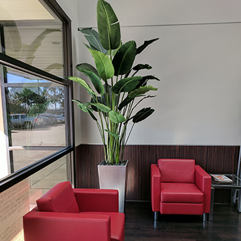 Commercial Interior Design by Creative Branch - Faux Potted Plants