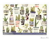 Peter Pauper Press Notecards - 5 x 3.5, Watercolor Succulents
