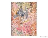 Paperblanks Midi Journal - Anemone, Lined