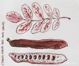 J. Herbin 1670 Anniversary Caroube de Chypre Ink ThINK Thursday closeup