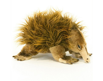 Echidna plush toy  - Harry -  25 cm