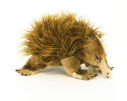 Echidna plush toy  - Harry -  25 cm