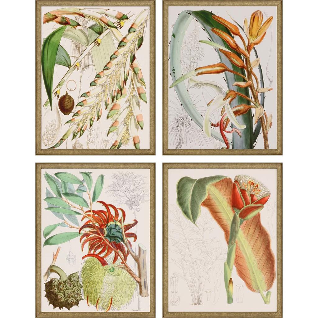 Tropical Variety Set of Four Framed Art