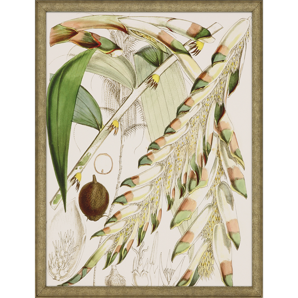 Tropical Variety Set of Four Framed Art -one