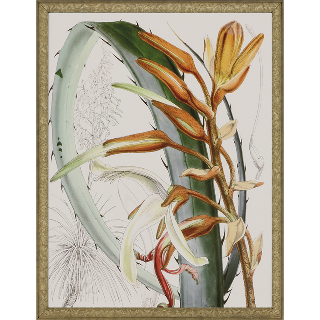 Tropical Variety Set of Four Framed Art -two