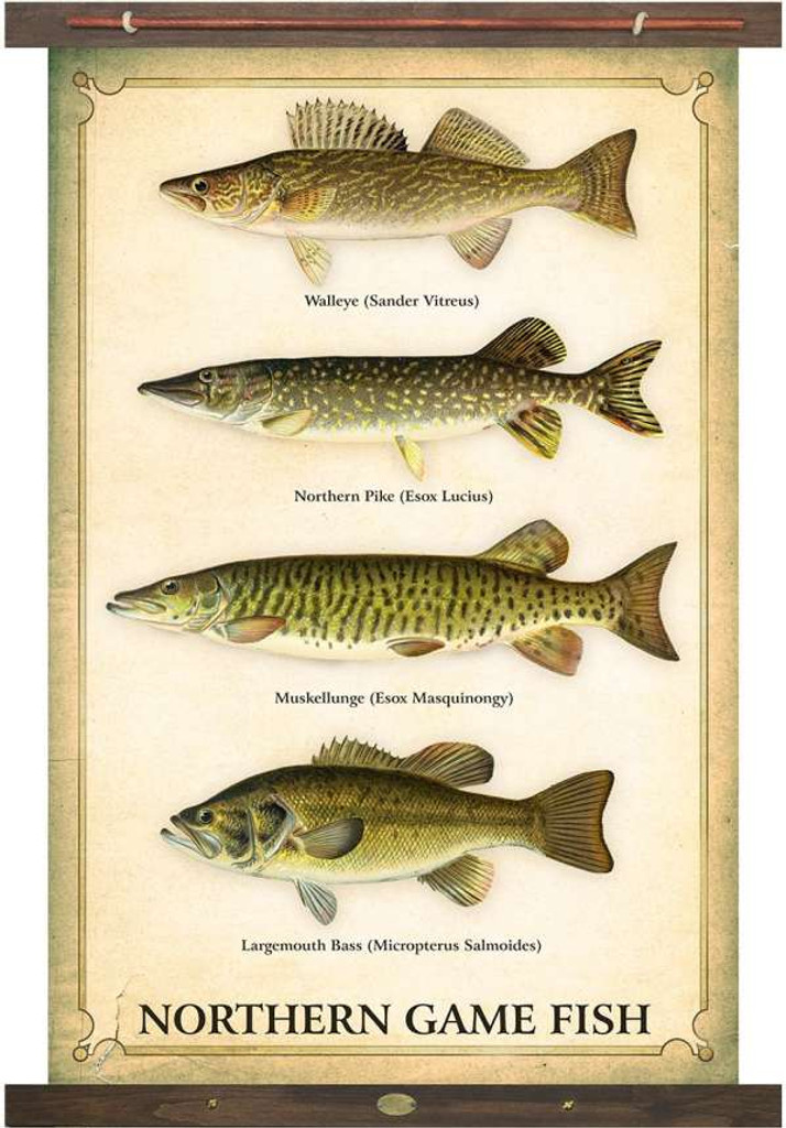 Vintage Inspired Lake Fish Tapestry Wall Art