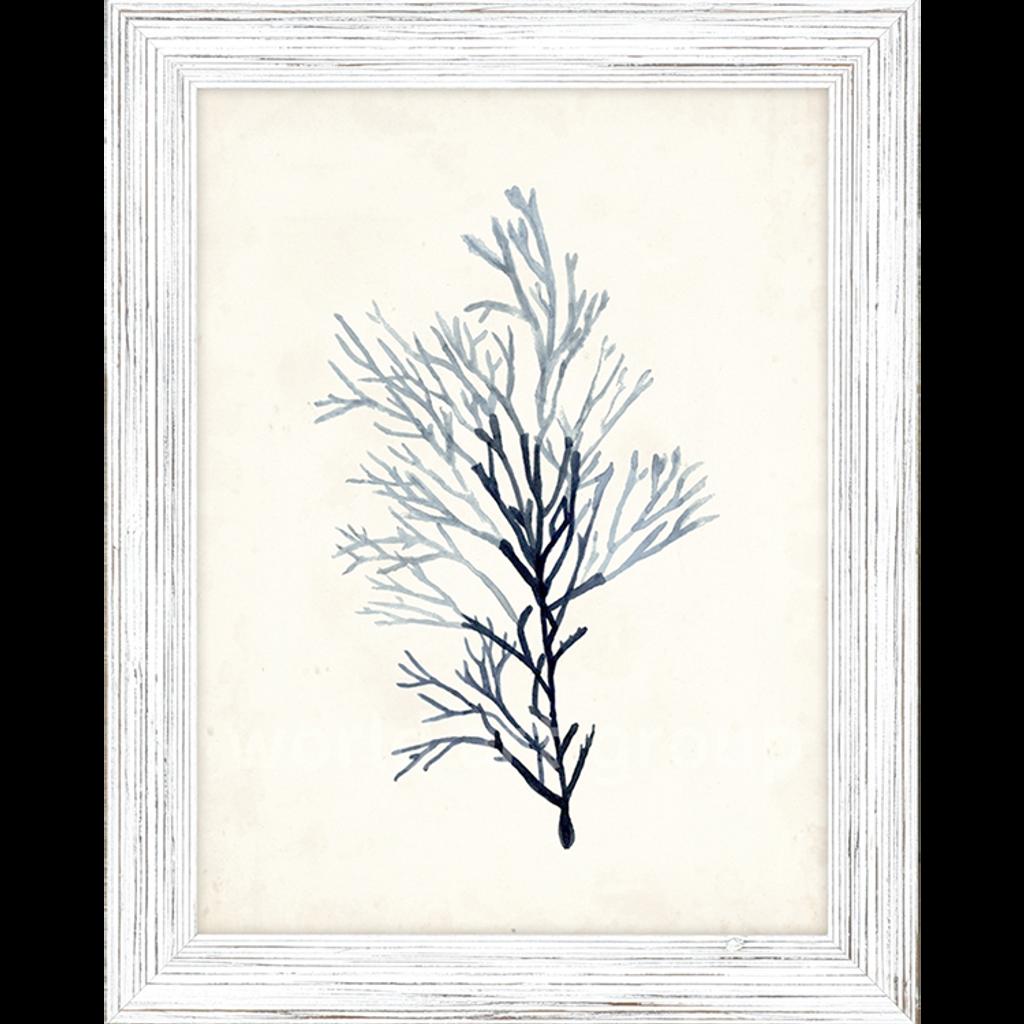 Blue Seaweed Specimens Framed Set of Four-three