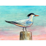 Royal Tern Floor Mat