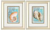 Nautilus and Turban Shell Framed Prints
