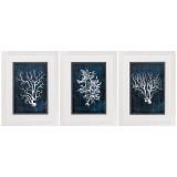 Blue Coral Framed Prints - Set of 3