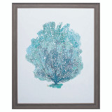 Aqua Sea Fan on White I