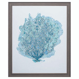 Aqua Sea Fan on White II