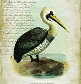 Pelican Vintage Canvas Tapestry Wall Art close up pelican art
