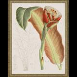 Tropical Variety Set of Four Framed Art -three