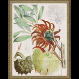 Tropical Variety Set of Four Framed Art -four
