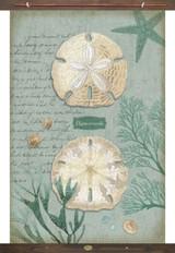 Aqua Sand Dollars Tapestry Wall Art