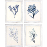 Blue Seaweed Specimens Framed Set of Four