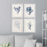 Blue Seaweed Specimens Framed Set of Four room view