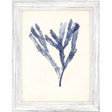 Blue Seaweed Specimens Framed Set of Four-one