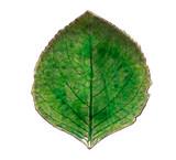 Riviera Hydrangea Small Leaf Plate - Tomate
