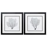 Sea Fan Framed Sketches - Set of Two