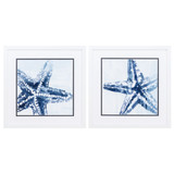 Starfish Study in Blue - Set of Two