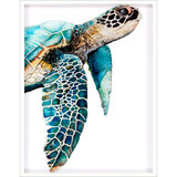 Great Sea Turtle in White Shadowbox Framing