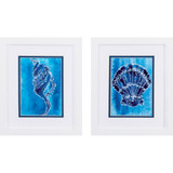 Cerulean Shells B White Framed Art - Set of Two