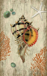 Rustic Striped Murex Shell Wall Art