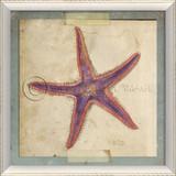 Starfish No. 6 Beach Art