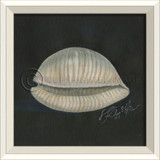 White Cottage Seashell Art No. 2
