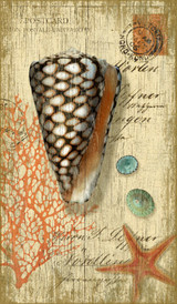 Cone Shell Art from Suzanne Nicoll