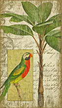 Colorful Parrot and Palm Island Art