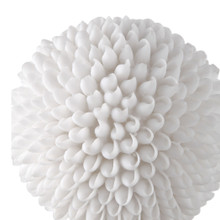 Cascara White Shell Sculpture close up