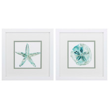 Turquoise Water Sand Dollar and Starfish Art - Set of 2