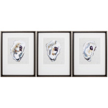 Oyster Shell Study - Trio of Framed Prints