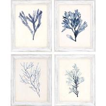 Blue Seaweed Specimens Framed Set of Four