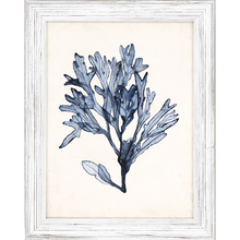 Blue Seaweed Specimens Framed Set of Four-two