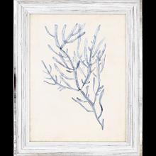 Blue Seaweed Specimens Framed Set of Four-four