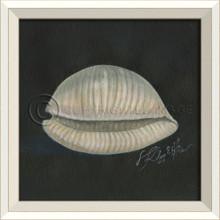 White Cottage Seashell Art No. 2