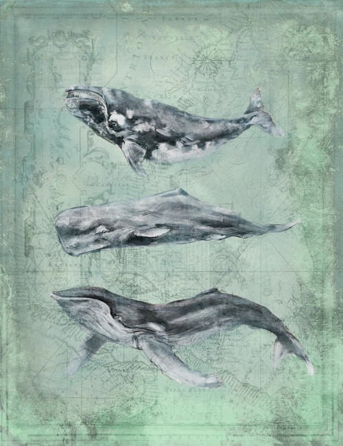 Three Whales Art by Anthony Morrow