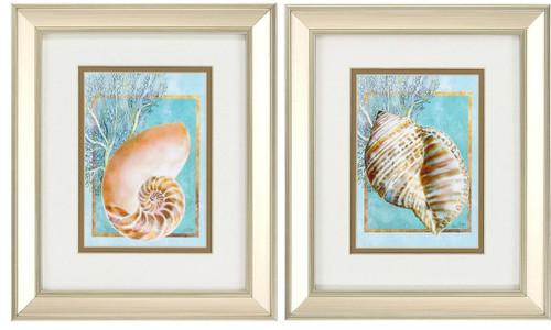 Nautilus and Turban Shell Framed Prints