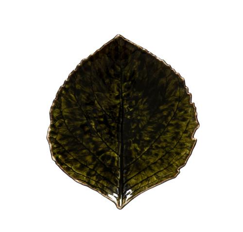 Riviera Hydrangea Small Leaf - Forest