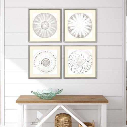 Set of Four Framed Neutral Sea Shells room view