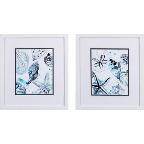 Cerulean Sealife B White Framed Art - Set of Two
