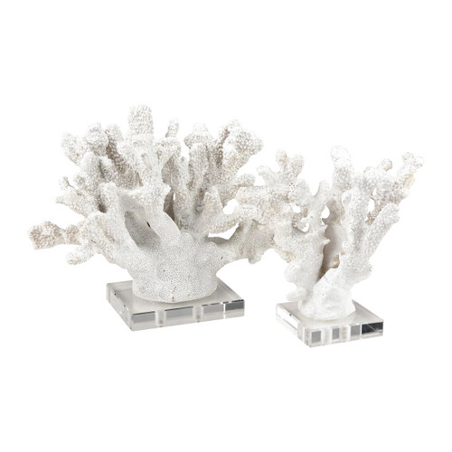Coral Sculptures on Acrylic Bases
