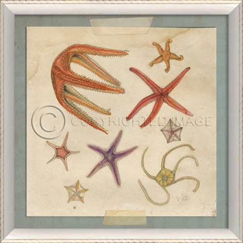 Starfish No.7 Beach Art